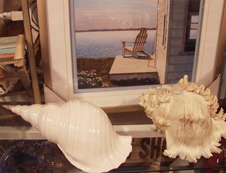 Shells on a Shelf