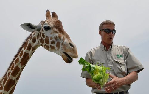 Giraffe and Ranger Chris