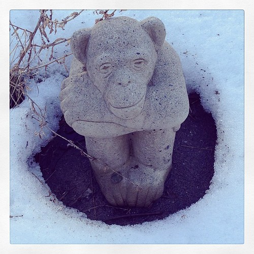 Backyard chimp is happy the snow is melting.