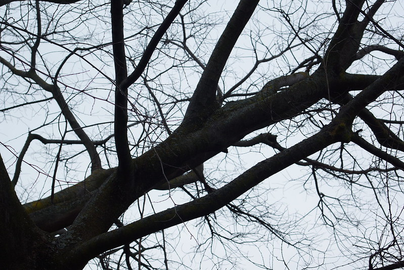 2017-02-15 Twigs Test - Take 4 [#2]