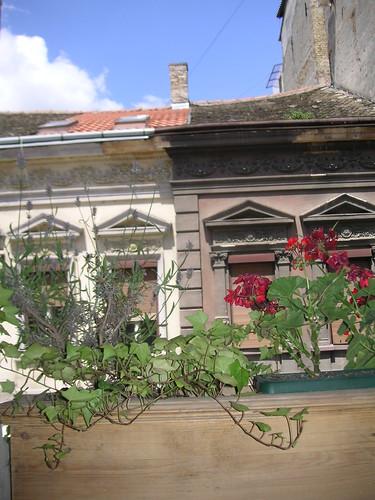 Houses Novi Sad