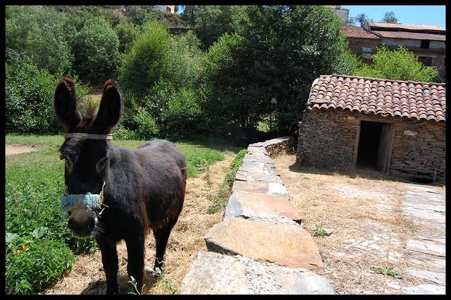 Molino de agua y burro en Avelanoso-Portugal
