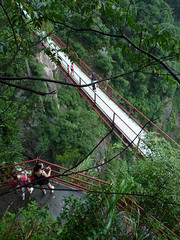 trail(0.0), freeride(0.0), rope bridge(0.0), abseiling(0.0), adventure(1.0), rainforest(1.0), suspension bridge(1.0), tree(1.0), canopy walkway(1.0), forest(1.0), jungle(1.0),