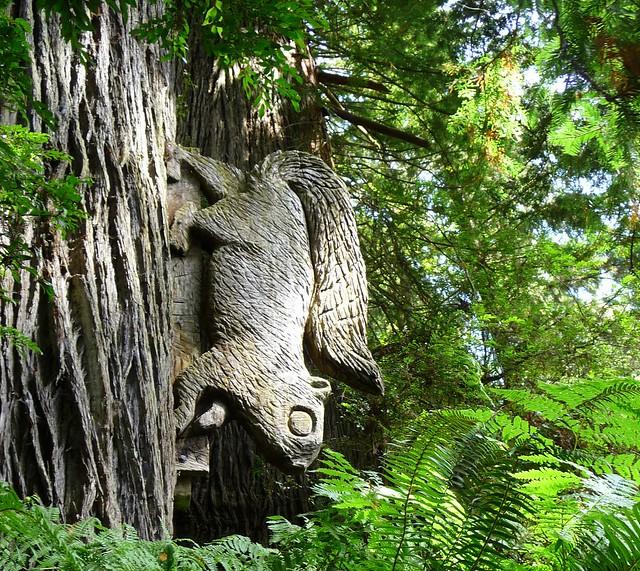 Redwood squirrel flickr photo sharing