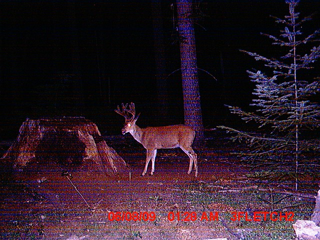 Trail Cam Pics Of Deer http://www.flickr.com/photos/42957267@N02/3958168512/