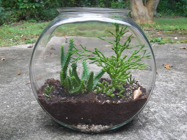 how to make a fish bowl terrarium