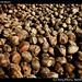 Many many coconuts