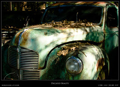 Decayed Beauty