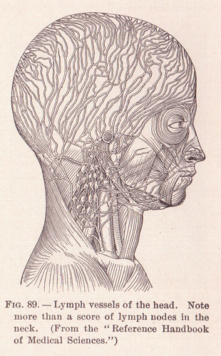 page 127 Lymph Vessels of the Head