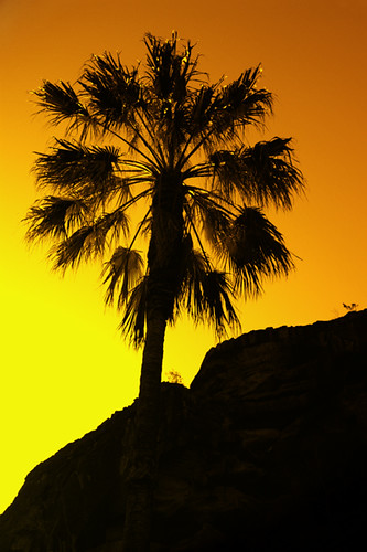sunset palm valley