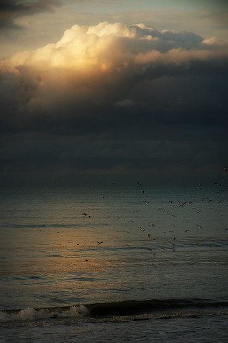 sea sunlight clouds sundown cloudy wave calm baltic tern lithuania mew palanga magicunicornverybest