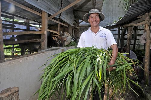 vietnam fodder6_lo