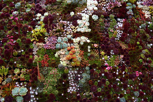 succulents wall