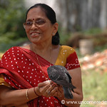 Communing with Pigeons - Kochi, India