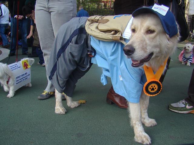 Image Result For Dog Carrier For Dog