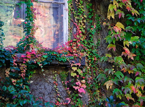 Wien - Herbst