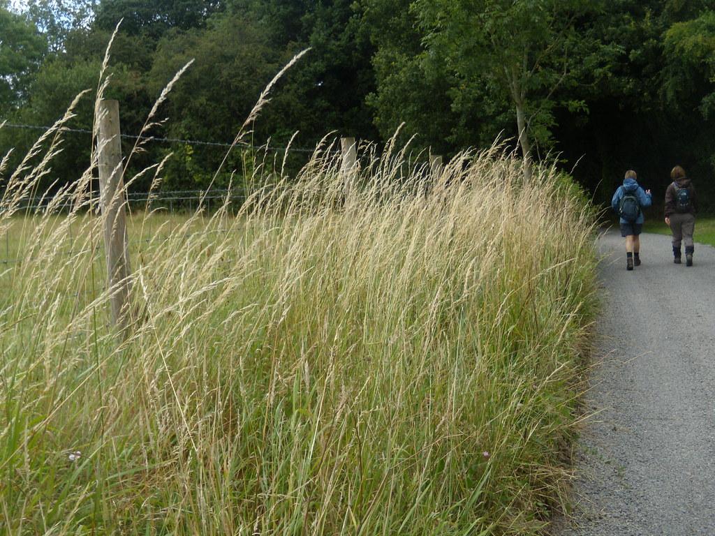 grass YHA Pangbourne walk
