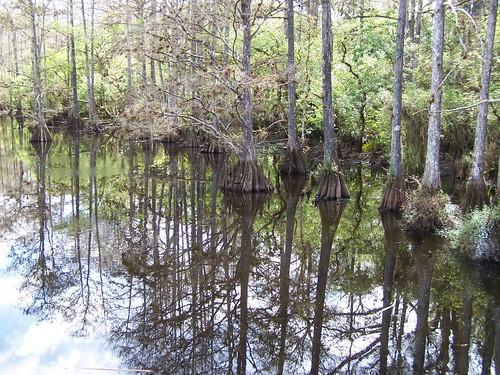 reflection nature water florida cypresstrees babcockranch