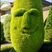 The Happy Conifer by Adam Dimech