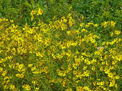flowers nature alabama wildflowers fz50 panasoniclumix limestonecounty bkhagar