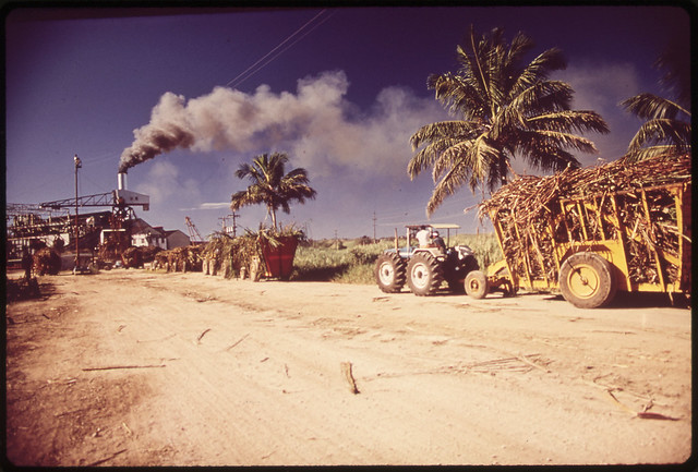 DOCUMERICA: Sugar Refinery. Trucks Bring in Freshly Cut Cane 02/1973 Mayagüez-Aguadilla, Puerto Rico John Vachon (1914-1975).