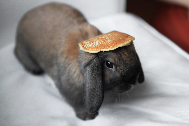 Yet another Bunny with a Pancake on its Head