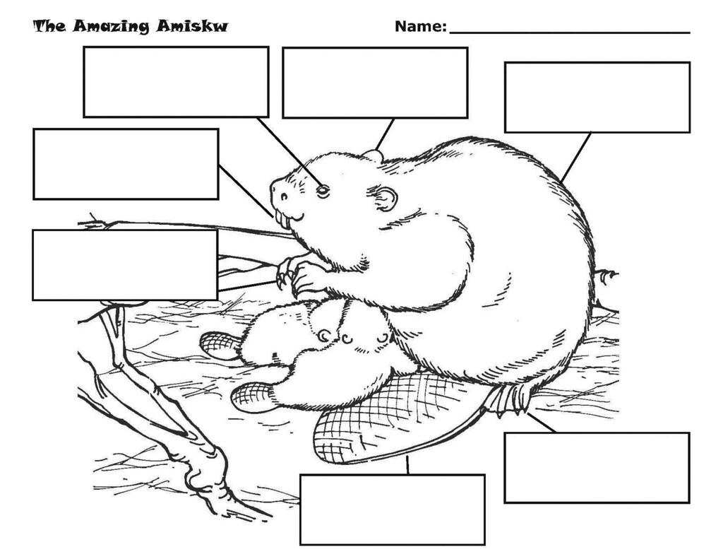 amazing amiskw beaver worksheet flickr photo sharing. Black Bedroom Furniture Sets. Home Design Ideas