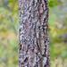 common hackberry - Photo (c) JanetandPhil, some rights reserved (CC BY-NC-ND)