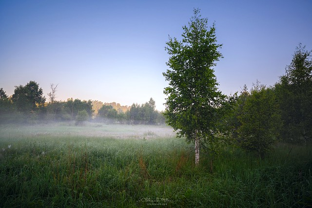 Summer misty morning in wild meadows of Russia