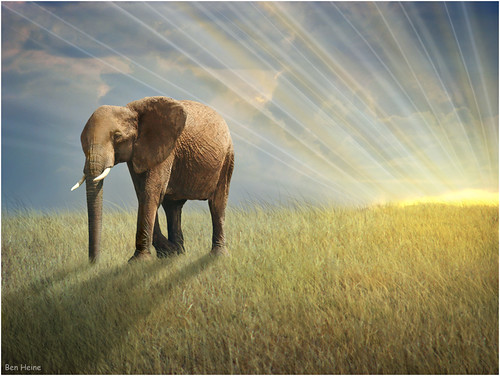 africa morning travel light sunset wild wallpaper sun elephant art texture nature grass animal sunrise season print poster landscape photography freedom evening countryside poem peace photographie time herbs nikond70 kenya earth geometry lumière details horizon meadow peaceful evolution philosophy liberté harmony memory poet planet terre savannah prairie spirituality conceptual sunrays copyrights paysage progression lighteffects bigfive sauvage compositeimage warmcolours savane côtedor digitalshot petersquinn benheine colourartaward hubertlebizay hubzay flickrunited walkwiththelight marcheaveclalumière infotheartisterycom stunningphotogpin