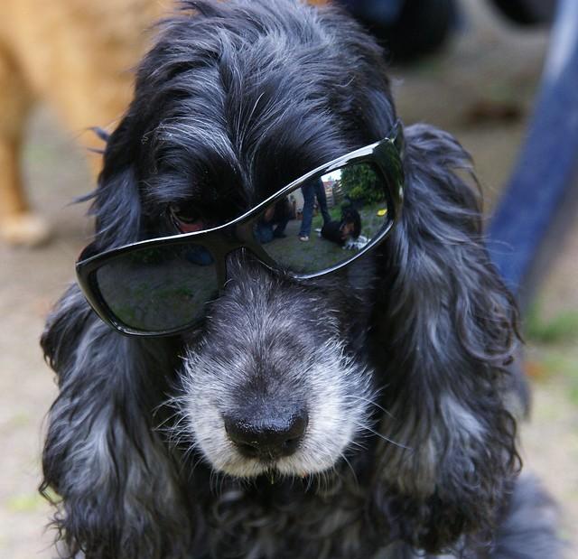 wayfarer zonnebril  met mijn zonnebril