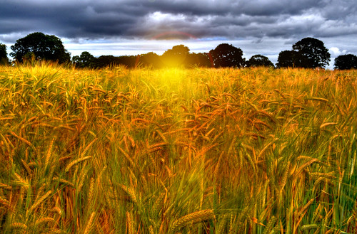 england sky sunlight field farm wheat harvest hdr ripe wirral bebington poulton mywinners platinumheartaward vineyardfarm