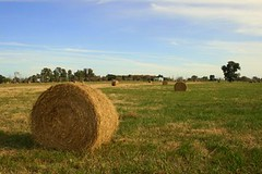 prairie, agriculture, land lot, farm, straw, hay, field, plain, plant, meadow, pasture, rural area, grassland,
