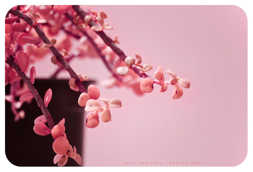hanging by a [pink!] moment...