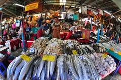Big catch of fish for sale - คลองเตย