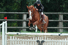 animal sports, equestrianism, english riding, eventing, mare, jumping, show jumping, hunt seat, equestrian sport, sports, recreation, outdoor recreation, equitation, horse, jockey,