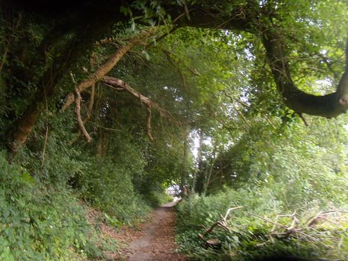 Path scene