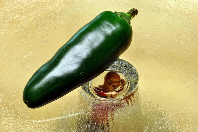 Trapped Under Glass with a Giant Jalapeno Pepper Overhead ...  Jalapeno