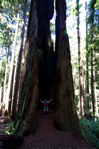walking in the humboldt redwoods    MG 0995