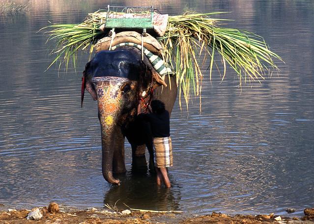 India. भारत गणराज्य.1991. Elefante decorado. Analógica Nikon D70