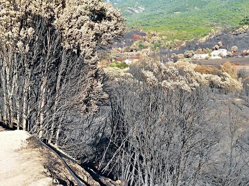 wood trees brown france fire corse corsica panasonic arbres feu bois maquis branche île végétation méditerrannée