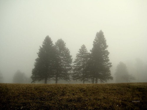 Foggy November Morning (1)