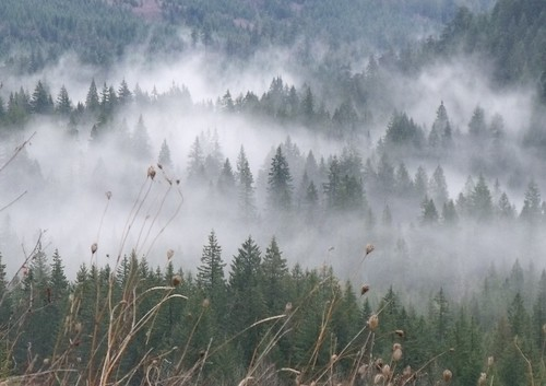 forest through the fog