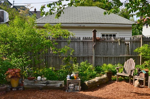 The View North in my urban backyard native plant garden, May 2011