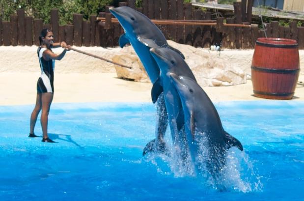 mundomar delfines