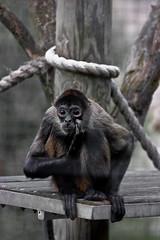 Toronto Zoo-ape