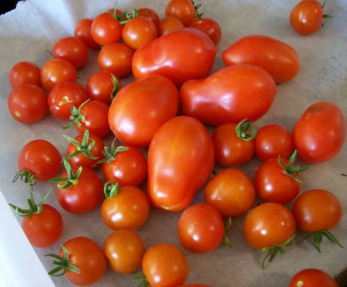 Purloined Tomatoes