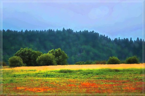 sky color tree field grass washington colorful wildlife meadow national impressionist nisqually refuge