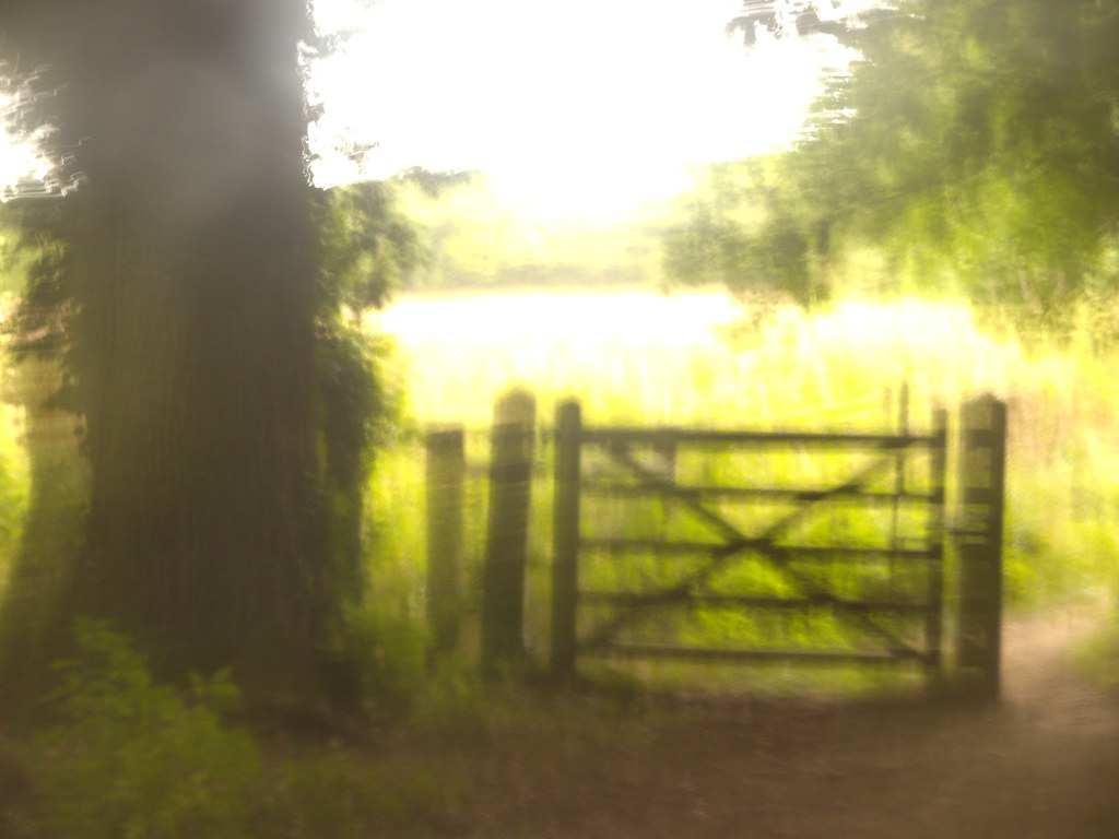 Gate out of a wood... ....into a lime green sea, Hassocks to Brighton