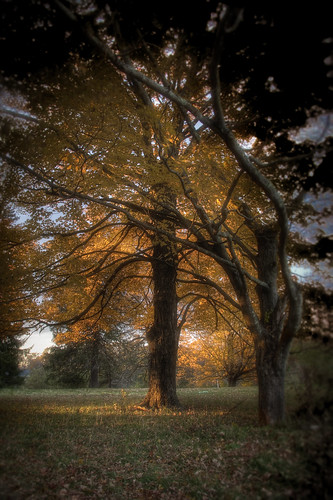 trees light sunset sunlight tree fall field leaves photoshop canon landscape evening october dusk curves newengland limbs hdr drumlinfarm fallscene canonefs1785mm newenglandfoliage 40d patrickcampagnone